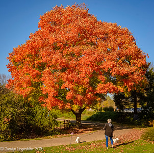 Color Me Autumn-2016