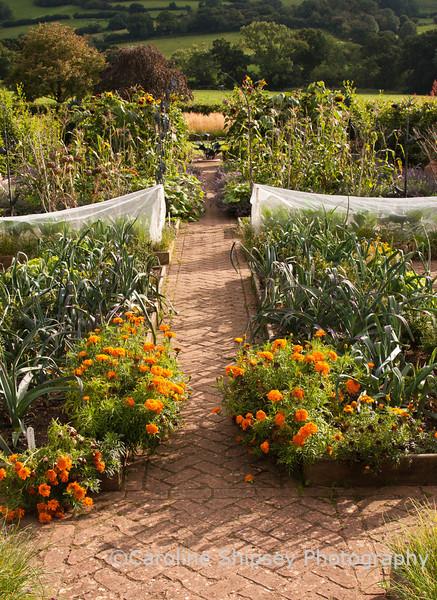 The Organic Gardens,Holt Farm-4944.jpg