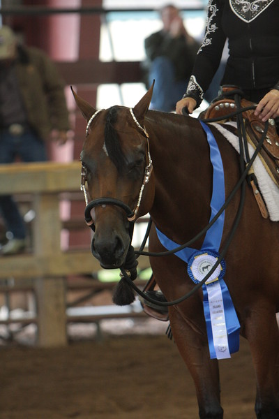 SSS 2 & 3 Year Old Western Pleasure Futurity