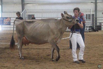 WI State Jersey Show 2017-Senior Cows