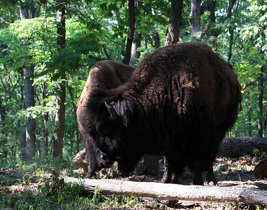 Lone Elk Park May 2012