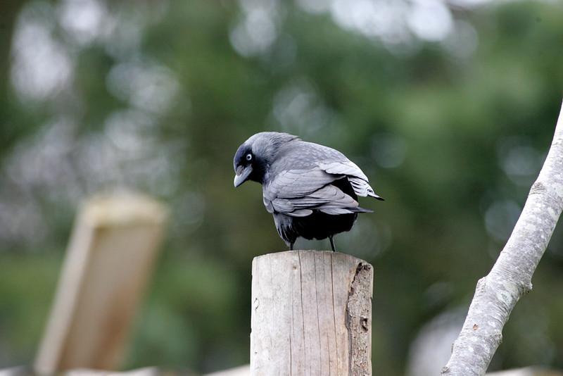 Newquay Zoo 323.jpg