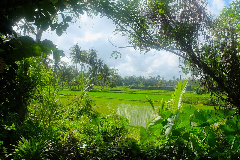 Downhill cycling in Bali Indonesia Southeast Asia adventures