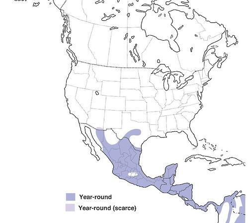 Green Kingfisher - Range Map
