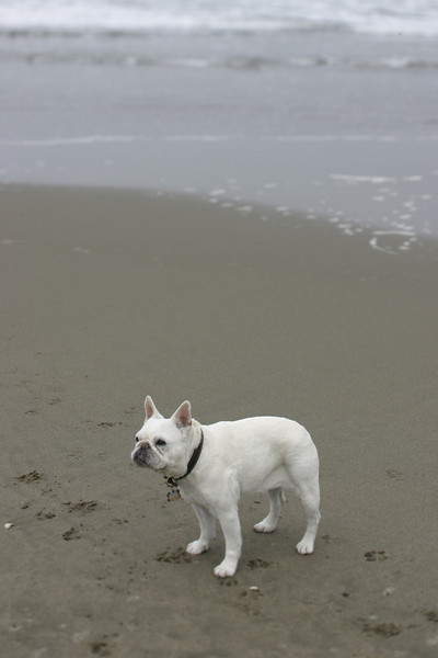 Decker at Ocean Beach, San Francisco, June 2008