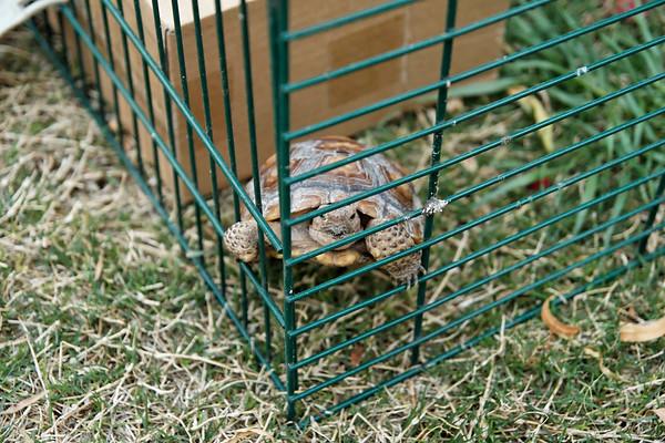 2007 Tortoises