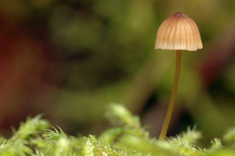 mushroommossy.jpg