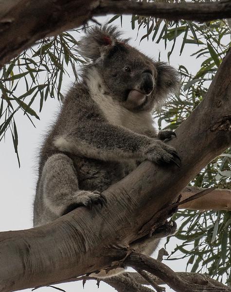 Australia-69.jpg