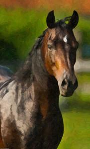 Horses & Horse Shows