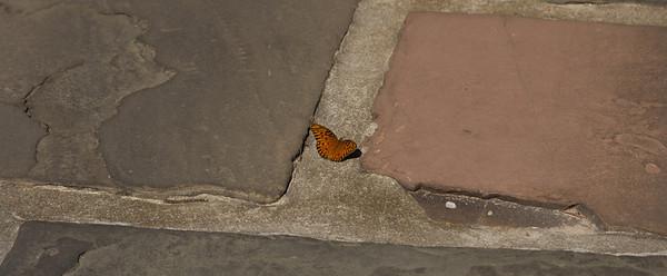 2011-11-02 Butterflies