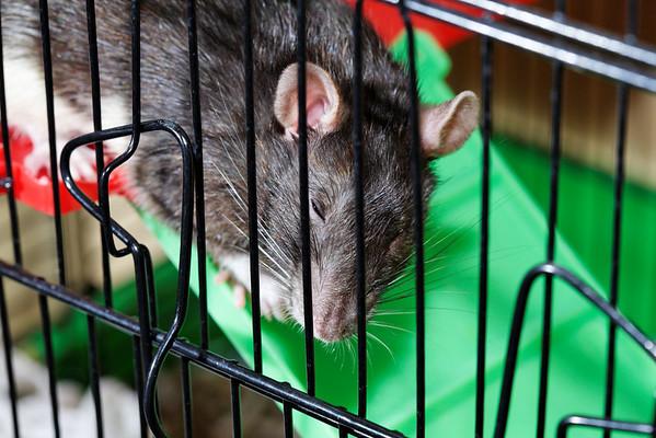 2009 Rats