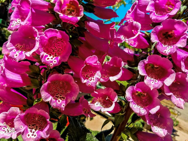 FlowersBoulderCO-001