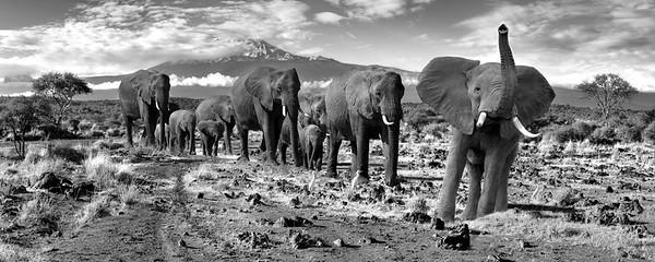 2016 AfricaElephantsHeader