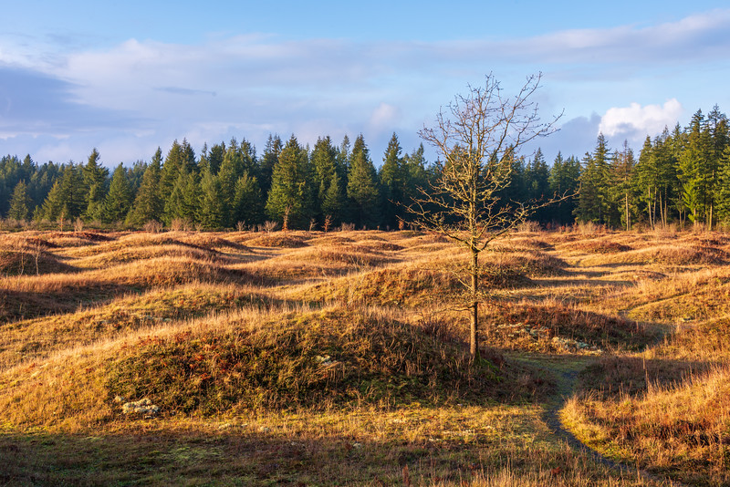 Mima Mounds Natural Area Preserve