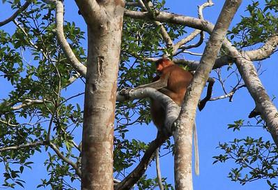 20101127 O tym jak Ruty na Borneo stopem jeździły
