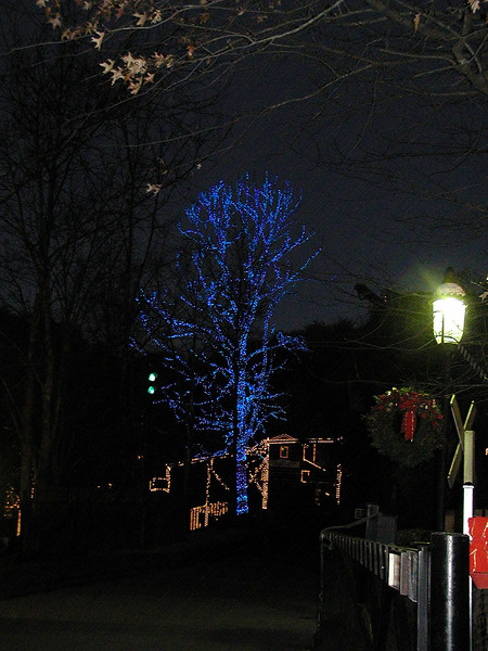 street lamp glow and blue tree.jpg
