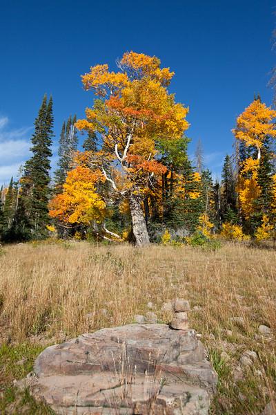 Cedar Breaks area, Southern Utah,Dixie National Forest