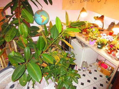 Plants! Nana and Penelope! Bank! 12.23.19