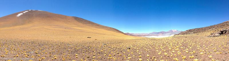 Phone_Atacama-5918.jpg