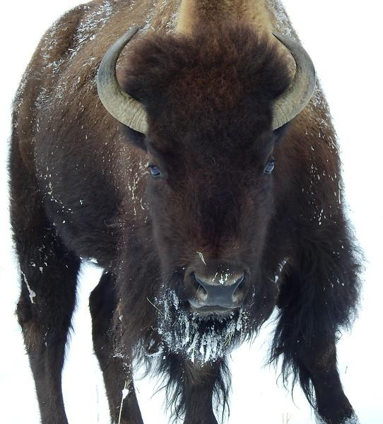 Buffalo (18).JPG