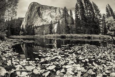 Amongst the Giants   Yosemite & Sequoia