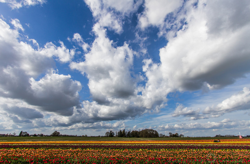 The sky the windmill and the tulips