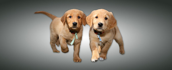 Special Puppy Images