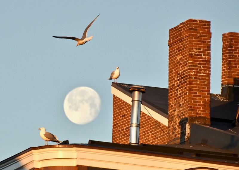 Moon Gulls .jpg