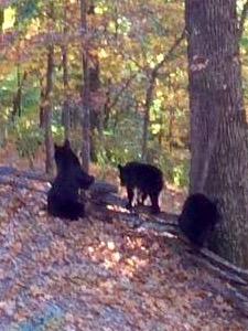 Bent Tree Bears