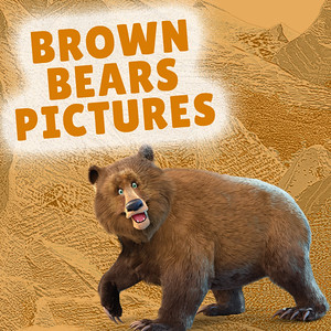 Day 2 Brown Bears Group