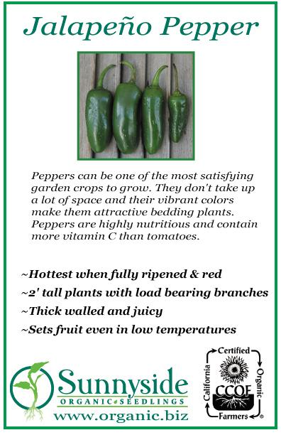 pepper_jalapeno_green_border copy.jpg