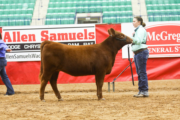 Red Angus
