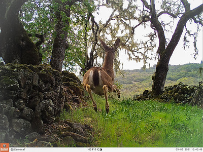 Trail Cam Shots - Day
