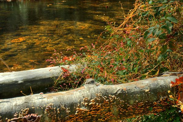 Smoky Mountains Fall 2007