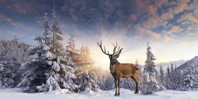 phototheatre-christmas deer-04.jpg