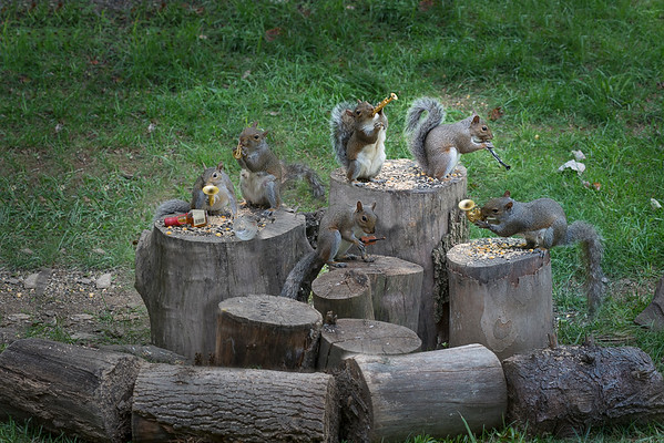Backyard squirrels playing instruments