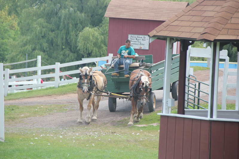 kars4kids_thezone_camp_girlsDivsion_activities_Horse&Buggy (12).JPG
