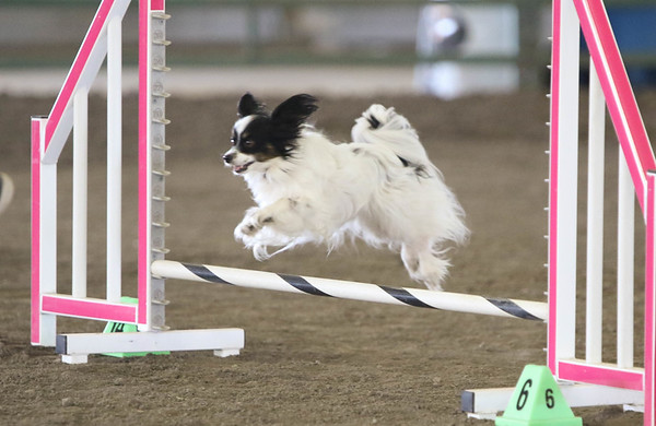 Excellent/Master JWW Small Dogs