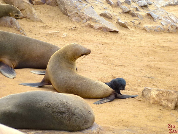 Cape cross fur seal colony, Namibia photo 3