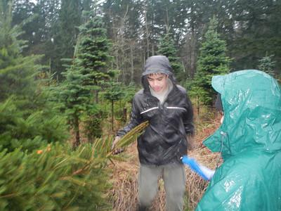 Christmas Tree Pickup - Dec 1