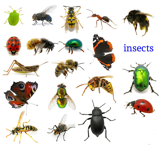 40 insect group.jpg
