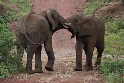 1494239972African-Safari-30.jpg