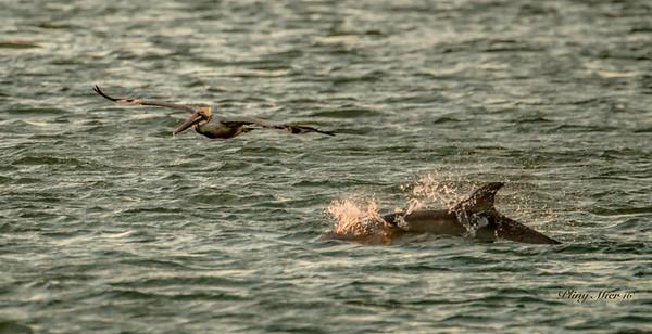 BP Dolphin_DWL5337.jpg