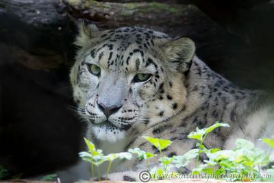 Marwell Zoo 08-10-16