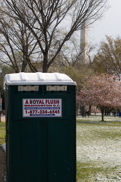 A Royal Flush, from a trip to see cherry blossoms in the snow (April 2007), Washington, DC