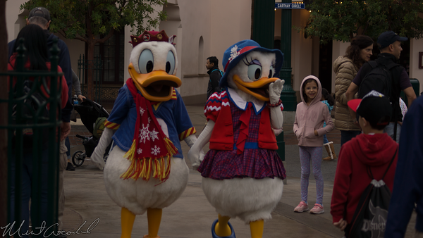 Disneyland Resort, Disney California Adventure, Buena Vista Street, Christmas, Donald Duck, Daisy Duck