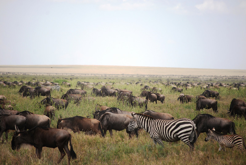 Serengeti (61).JPG