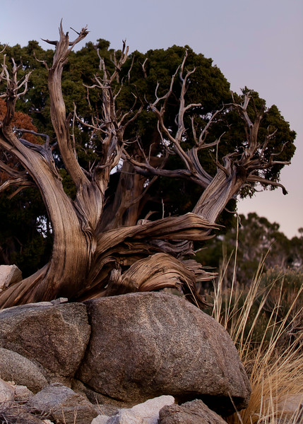 joshua_tree-5.jpg