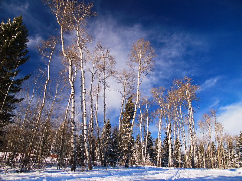 2010-12-22 14-44-56 - IMG_1369.jpg