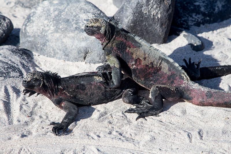 Galapagos_MG_4499.jpg